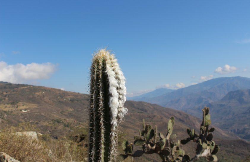 Bemutatkoznak az Andok szúrós hegylakói