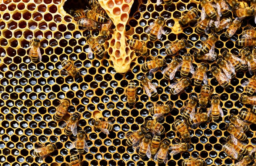 A leggyakoribb gyomirtó lehet a méhek veszte