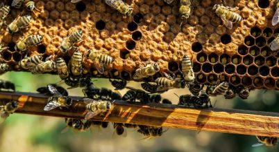 Franciaország betiltja a méhgyilkos vegyületeket