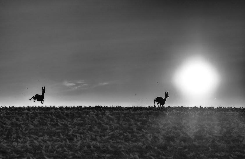 A nap képe: Napba szökkenő őzek