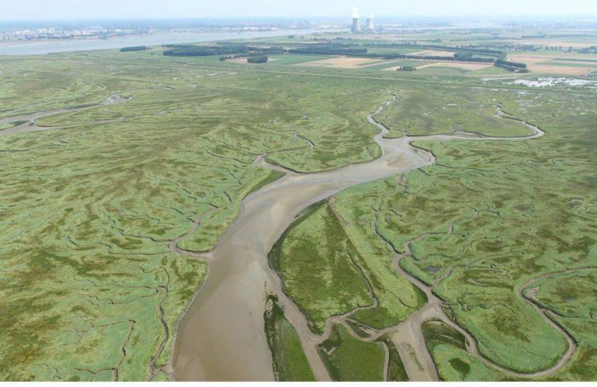 Az emelkedő tengerszint megkímélheti a partközeli vizes élőhelyeket
