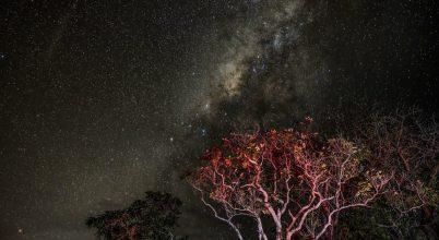 Csillagos képeslap Afrikából