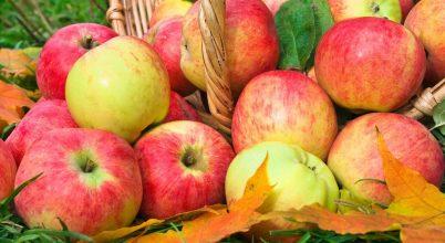 Válasszunk ízletes és tápértékben gazdag élelmiszert!