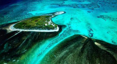 Bébikorallok telepítése segítheti az ausztrál Nagy-korallzátony regenerálódását