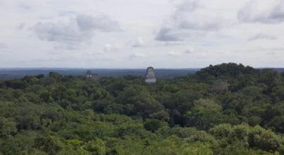 Maja metropoliszt találtak a dzsungelben