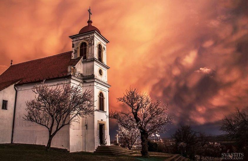 Magyarország Év Fája a havi-hegyi mandulafa