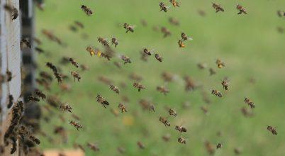 Felhő technológiával a méhek védelméért