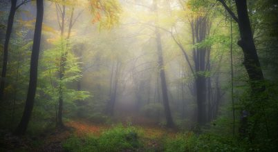 A nap képe: Egy ködös őszi erdőben