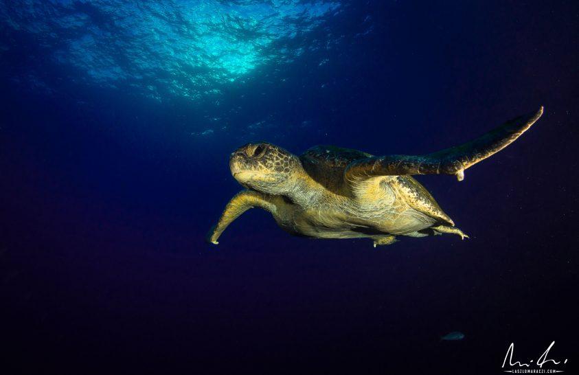 A nap képe: Repülő teknős
