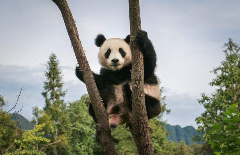 Ami a blogból kimaradt: érdekességek Kínából
