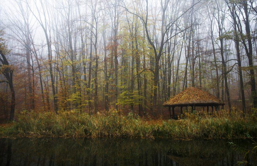 Őszi erdőben