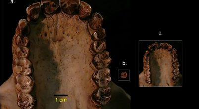 Megtalálták a legkisebb emberszabású maradványait