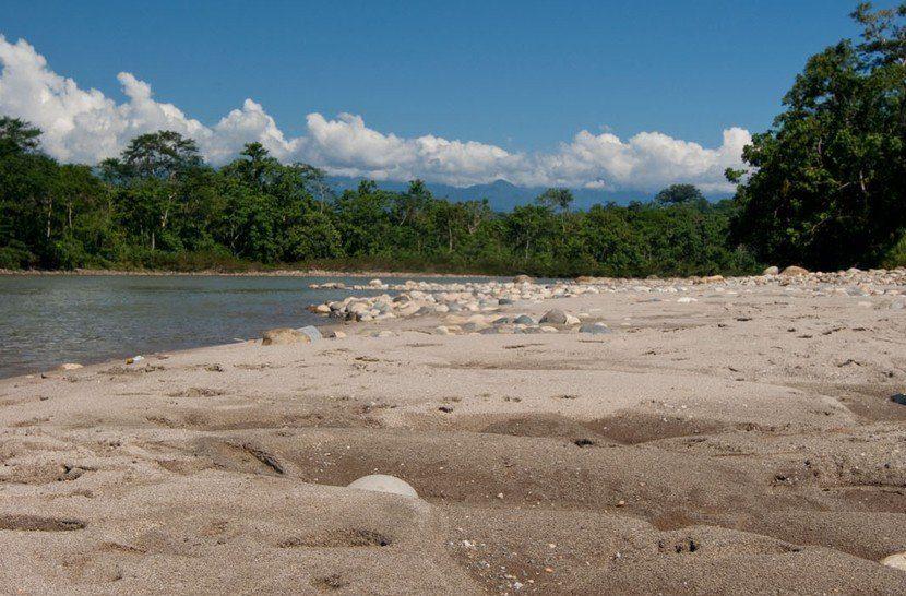 Egyre gyarapodó teknőspopuláció az Amazonas vidékén