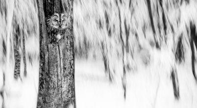 Lenergy – Az Év Természetfotósa 2018