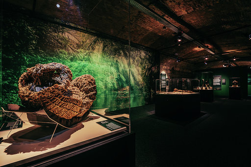 Szokatlan dologra bukkantak egy kosármúmiában