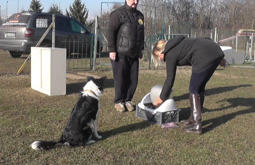 Hogyan utánozzák a kutyák az ember által mutatott cselekvést?