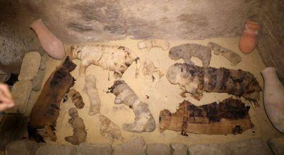 Macskákkal teli sírokat találtak Egyiptomban