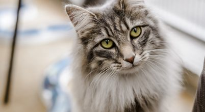 Amikor egy macska már az ember tekintetéből is olvas