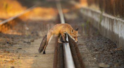 A nap képe: Átkelés a síneken