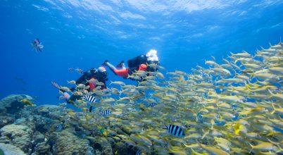 A korallok eddigi legalaposabb vizsgálata