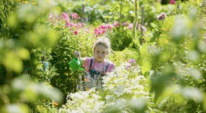 Kisgyermekek és a körülöttük lévő növények