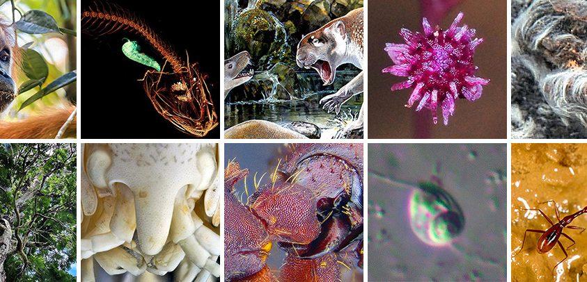 Tíz új faj 2018 májusából