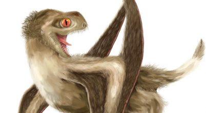 Elképesztő bundájuk volt a pteroszauruszoknak