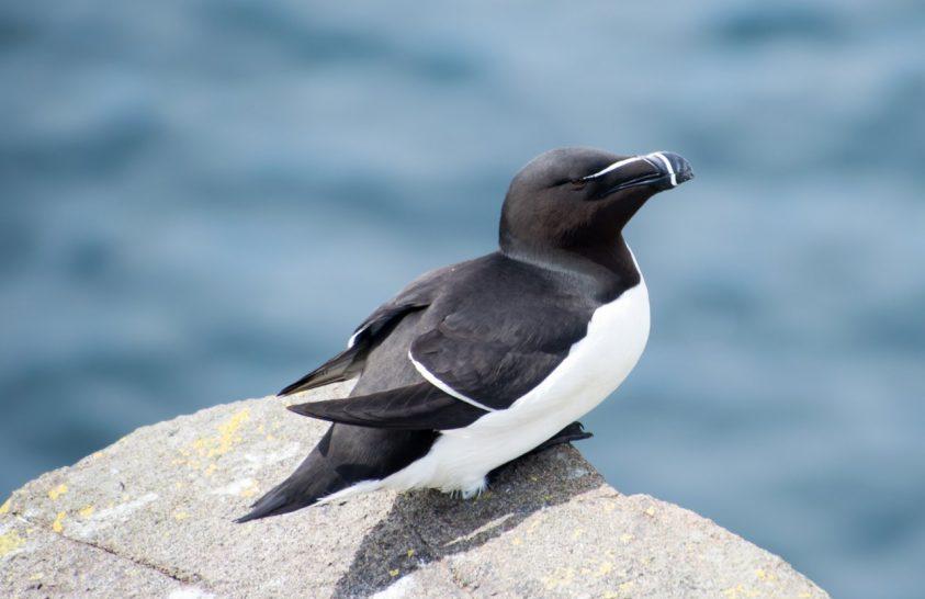 Amit a tengeri madarak elmondanak az árapályról