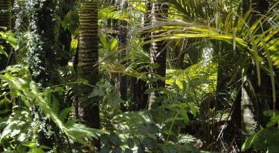 Sosem pusztult még ilyen gyorsan az Amazonas-medence