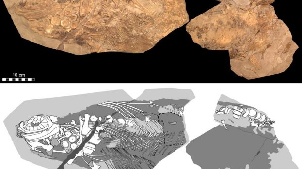 Hasonlóságok az ichtioszauruszok és a bálnák között