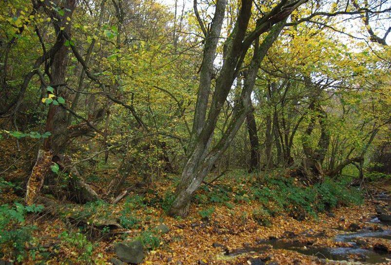 Megőrizheti természeti békéjét a Csarna-völgy