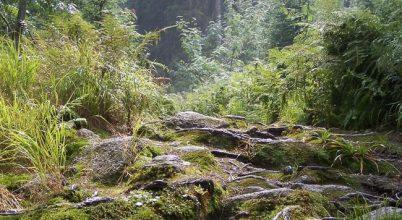 Több információra van szükség az erdőkről