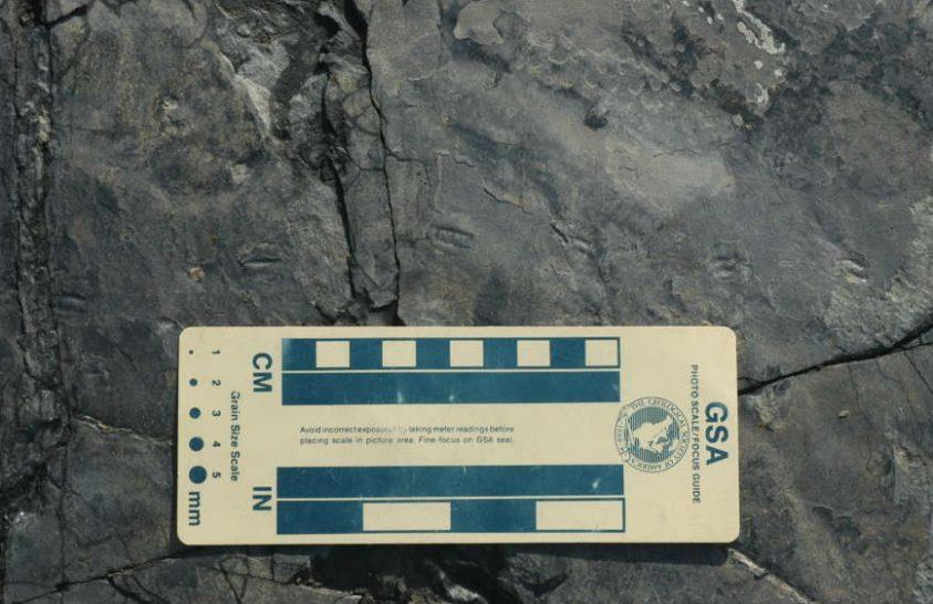 Megtalálták a legkisebb dinólábnyomokat