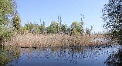 Az Ó-Dráva élővilágának megőrzése