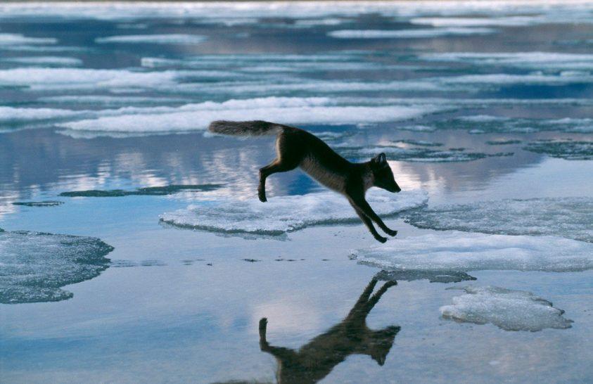Rekordgyorsasággal melegszik az Északi-sarkvidék