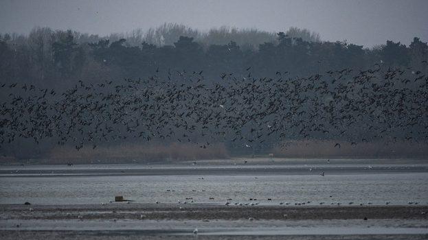 Egy város, ahol fontos a telelő madarak nyugalma
