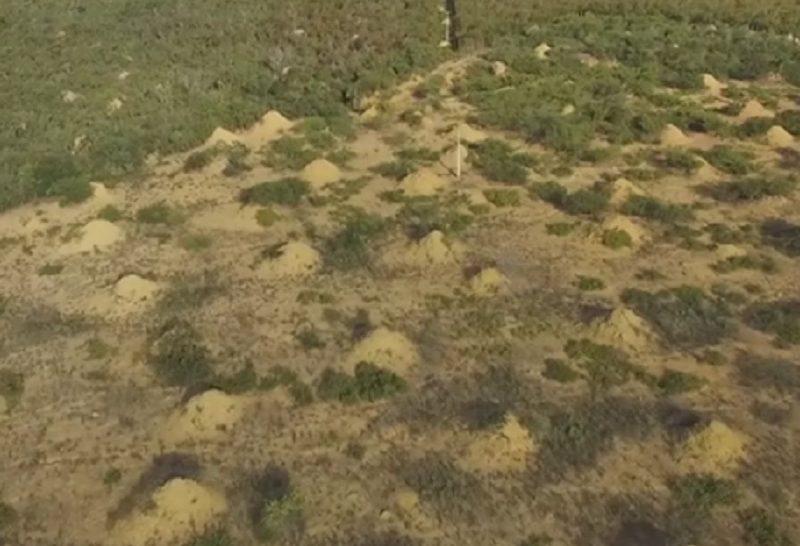 Így alakították a termeszek a tájat