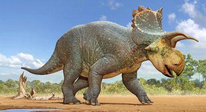Ritka dinoszaurusz-lelet került elő Arizonából