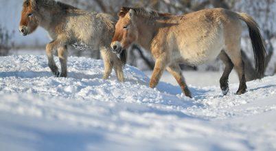 Vadlovak a havas magyar pusztában