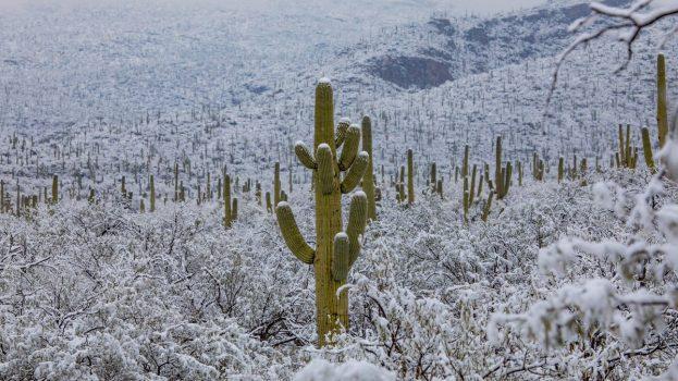 Ilyen az, amikor havazik a sivatagban