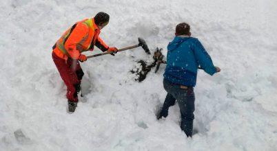 Osztrák vasutasok zergét ástak ki a hóból