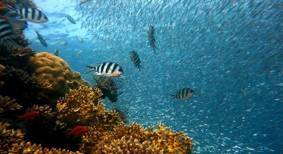 Négy év után a gyógyulás jeleit mutatják a hawaii korallok