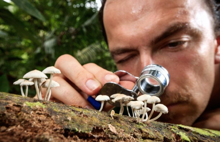 Talajból kivont DNS alapján ismerhető meg az erdők gombavilága