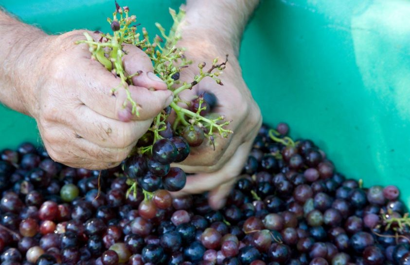Marsi bort ihatnak a jövő űrhajósai?