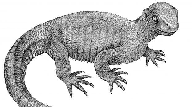 A csontrák egyik legkorábbi példájára bukkantak