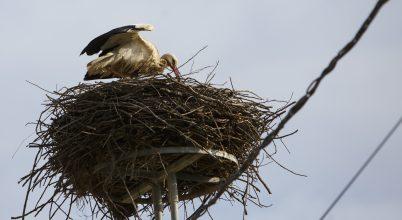 A klímaváltozás és a költöző madarak