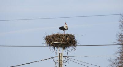 Madárbarát oszlopok várják a visszatérő gólyákat