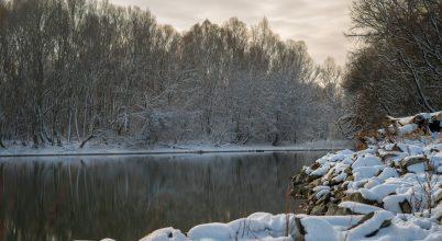 Átalakulóban a Duna élővilága