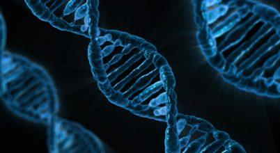 Szupererős aggyal születhettek a génszerkesztett kínai ikrek