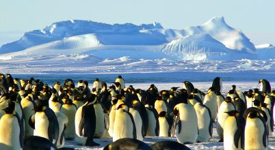 Nagyon ritka pingvint vettek videóra